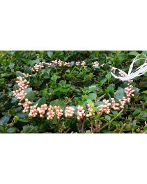 ST10 peach pearls